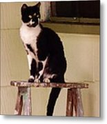 Portrait Of A Painted Cat Metal Print