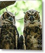 Portrait Of A Pair Of Owls Metal Print