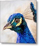 Portrait Of A Peacock Metal Print