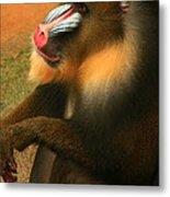 Portrait Of A Primate  Metal Print