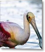Portrait Of A Roseate Spoonbill Metal Print