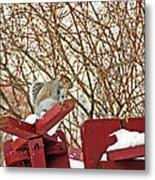 Winter Squirrel Metal Print