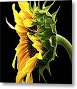 Portrait Of A Sunflower Metal Print