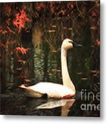 Portrait Of A Swan Metal Print