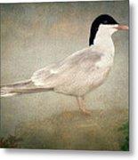 Portrait Of A Tern Metal Print