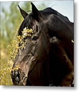 Portrait Of A Thoroughbred Metal Print