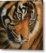 Portrait Of A Tiger Metal Print by David Stribbling