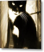 Portrait Of A Tuxedo Cat Iv Metal Print