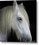 Portrait Of A White Horse Metal Print