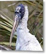 Portrait Of A Woodstork Metal Print