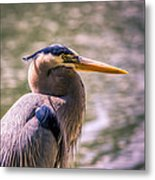 Portrait Of Ardea Herodias Metal Print