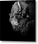 Portrait Of Buffalo In Black And White Metal Print