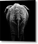 Portrait Of Elephant In Black And White II Metal Print