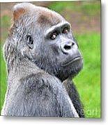 Portrait Of King Kongs Cousin II Metal Print