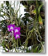Portrait Of Orchids Metal Print