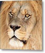 Portrait Of The Lion Metal Print