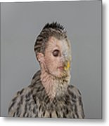 Portrait Of Young Man With Owl Overlay Metal Print