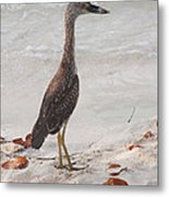 Pose Off Metal Print