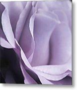 Posing Purple Rose Flower Metal Print
