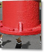 Postcards From Otis - The Hydrant Metal Print
