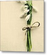 Posy Of Snowdrops Metal Print
