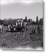 Potato Harvest 3 Metal Print