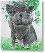 Potbellied Pig Pet Portraits Watercolor Memorial Made To Order 5x7 Inch Metal Print