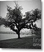 Potomac Tree Metal Print