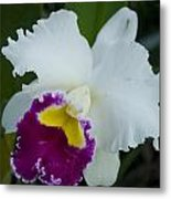 Potted Orchid Metal Print
