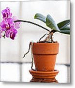 Potted Pink Orchid Metal Print