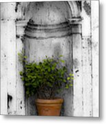 Potted Plant At Villa D'este Near Rome Italy Metal Print