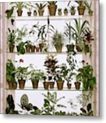 Potted Plants On Shelves Metal Print