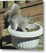 Potted Squirrel Metal Print