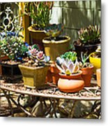 Potted Succulents  Metal Print