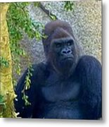 Powerful Female Gorilla Metal Print