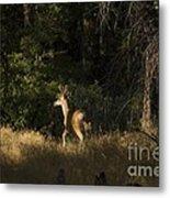 pr 140 -Deer in the Grass Metal Print