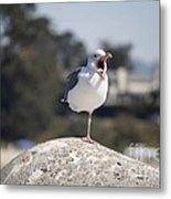 pr 175 - The Tired Seagull Metal Print