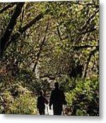 Prairie Creek Redwood State Park With Sun Breaking Through Trees Metal Print