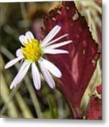 Prairie Flower And Red Lambs Quarter Metal Print