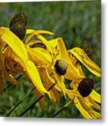 Prairie Flowers In Wind Metal Print