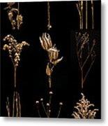 Prairie Plant Still Life Metal Print