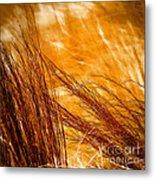 Prairie Winds Metal Print