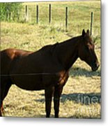 Prarie Stallion In The Shade Metal Print by Barbara Griffin
