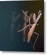 Praying Mantis 1 Metal Print