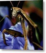 Praying Mantis  Closeup Portrait 4 On Iris Flower Metal Print
