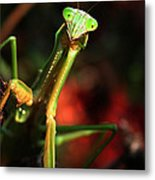 Praying Mantis Portrait Metal Print