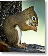 Praying Squirrel Metal Print