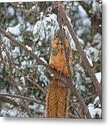 Praying Squirrel  Metal Print
