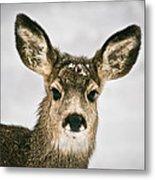 Precious - Mule Deer Fawn - Casper Mountain - Casper Wyoming Metal Print