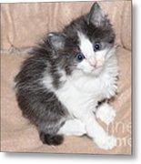 Precious Kitten Metal Print